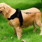 MIDWEC Harnais ajustable pour chien de première qualité Nouveau design anti traction, Intérieur tissu doux, pour animaux domestiques, petit chien, chien moyen, grand chien, existe en 4 tailles de la m TOP 6 image 4 produit