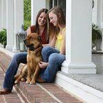 PetSafe Collier Anti Aboiement Rechargeable de la marque PetSafe TOP 5 image 2 produit