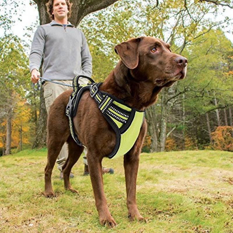 Des harnais pour chien confortables à prix imbattables