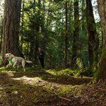 Ruffwear Front Range 17 Dog Harness Medium Blue Dusk de la marque Ruffwear TOP 13 image 6 produit