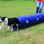 Trixie Dog Activity Tunnel Agilité 40 cm / 2 m Bleu de la marque Trixie TOP 9 image 2 produit