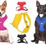 Dexil Elite Gamme Luxe Colliers pour chiens en néoprène rembourré réglable ultra résistant S/M/L/XL/XXL de la marque Dexil TOP 3 image 3 produit