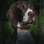 Sport Dog DSL-400-19 Beeper pour Chien de la marque SportDog TOP 5 image 2 produit