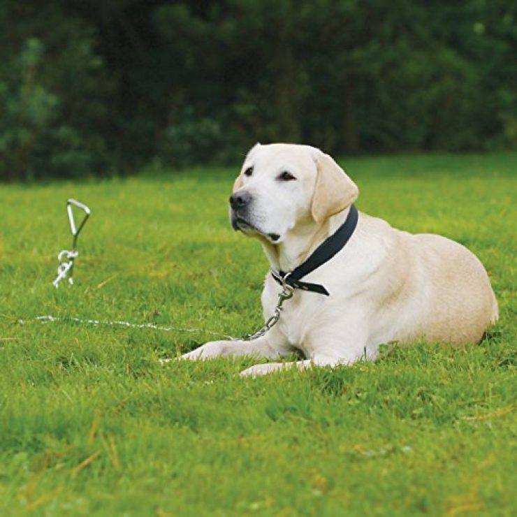 chaine chien principale