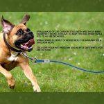 Chien de serrage de câble pour chien Tieout Piquet en acier inoxydable, et 10m 360° Laisse et attache en spirale domestiques complet pour extérieur, jardin et TOP 2 image 2 produit