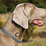 Demi Choke en métal robuste Chromé 3rangées antidérapant semi-check Chaîne Collier pour chien de la marque Champion TOP 1 image 2 produit