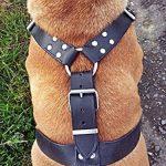 EXTRA LARGE CUIR HARNAIS POUR CHIEN POUR GROS CHIEN MASTIFF PINSCHER de la marque Avon Pet Products Ltd. TOP 3 image 3 produit