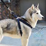 Poppypet Denim Pet Harnais Laisse pour chien Laisse pour chien Pet Harnais réglable Noir S de la marque Poppypet TOP 2 image 1 produit