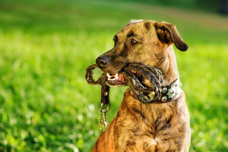 Un collier pour chien personnalisé, à la fois fun et pratique principale