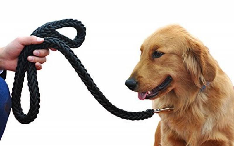 trouvez la laisse pour chien en corde qui vous ressemble tout pour mon chien. Black Bedroom Furniture Sets. Home Design Ideas