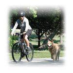 Pet Ego Cycleash Laisse pour Vélo de la marque Pet Ego TOP 8 image 2 produit