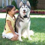 PetSafe PRF-3004XW-20 Clôture Anti Fugue pour Chien Moyen/Grand de la marque PetSafe TOP 13 image 1 produit