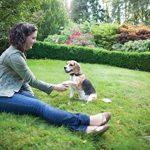 PetSafe Système de clôture anti-fugue avec fil In-Ground Fence de luxe pour petits chiens de la marque PetSafe TOP 5 image 1 produit
