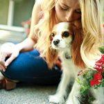 PetSafe Système de clôture anti-fugue avec fil In-Ground Fence de luxe pour petits chiens de la marque PetSafe TOP 5 image 3 produit