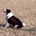 Poppypet Laisse Rond en Nylon pour Chien Lasso ajustable avec collier pour Chien Rond en nylon corde de traction de chien Marron de la marque Poppypet TOP 3 image 1 produit