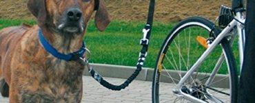Un chien, un vélo : le bonheur total principale