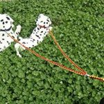 Adogo Double laisse anti-emmêlement avec double attache pour 2 chiens de la marque Adogo TOP 5 image 4 produit
