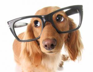 Conseil chien
