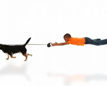 Le harnais Animalin anti traction fait ses preuves principale