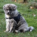 Multi Harnais ANIMALIN® - S Noir de la marque Animalin® TOP 2 image 0 produit